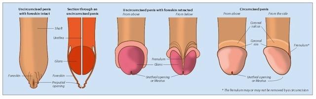 ghid circumcizie